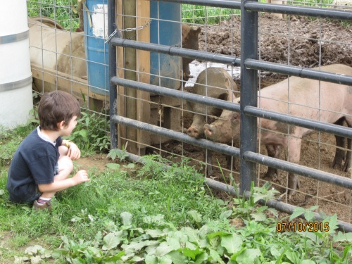 That boy loved them pigs. That mud loved them shoes too.