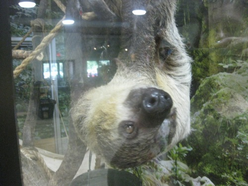 This sloth sees right into my soul.